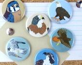 Raptor Pins | Pack of 6 | nature hawk birder bird of prey eagle wildlife stocking stuffer button badge birdwatcher