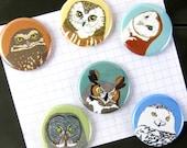 Owl Magnets | Boxed Set of 6 | nature outdoors bird of prey raptor birder wildlife stocking stuffer fridge magnet birdwatcher