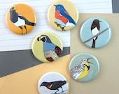Grasslands Birds Magnets | Boxed Set of 6 | nature outdoors birder california wildlife stocking stuffer fridge magnet birdwatcher