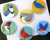 Eastern Backyard Bird Magnets | Boxed Set of 6 | nature outdoors birder songbird cardinal stocking stuffer fridge magnet birdwatcher