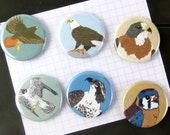 Raptor Magnets | Boxed Set of 6 | nature outdoors bird of prey hawk birder eagle wildlife stocking stuffer fridge magnet birdwatcher