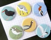 Shorebird Magnets | Set of 6 | nature outdoors birder beach ocean wildlife stocking stuffer fridge magnet birdwatcher