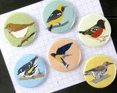 Wild Birds Magnets | Boxed Set of 6 | nature california outdoors birder wildlife stocking stuffer fridge magnet birdwatcher