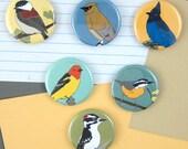 Woodland Bird Magnets | Boxed Set of 6 | wild birds forest birds birder gift wildlife art nature lover cute songbird
