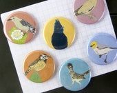 Desert Birds Magnets | Set of 6 | nature outdoors birder southwest sonora wildlife stocking stuffer fridge magnet birdwatcher