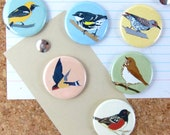Wild Hills Birds Pins | Pack of 6 | nature california outdoors birder wildlife stocking stuffer button badge birdwatcher