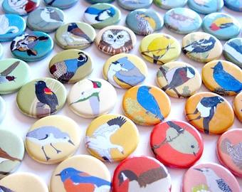 Wild Bird Magnet Gift Set   Choose from 15 themes    nature outdoors birder songbird stocking stuffer fridge magnet birdwatcher