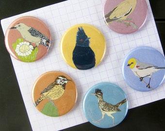 Desert Birds Magnets   Set of 6   nature outdoors birder southwest sonora wildlife stocking stuffer fridge magnet birdwatcher