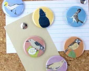 Desert Bird Pins   Pack of 6   nature southwest sonora wildlife stocking stuffer button badge birdwatcher