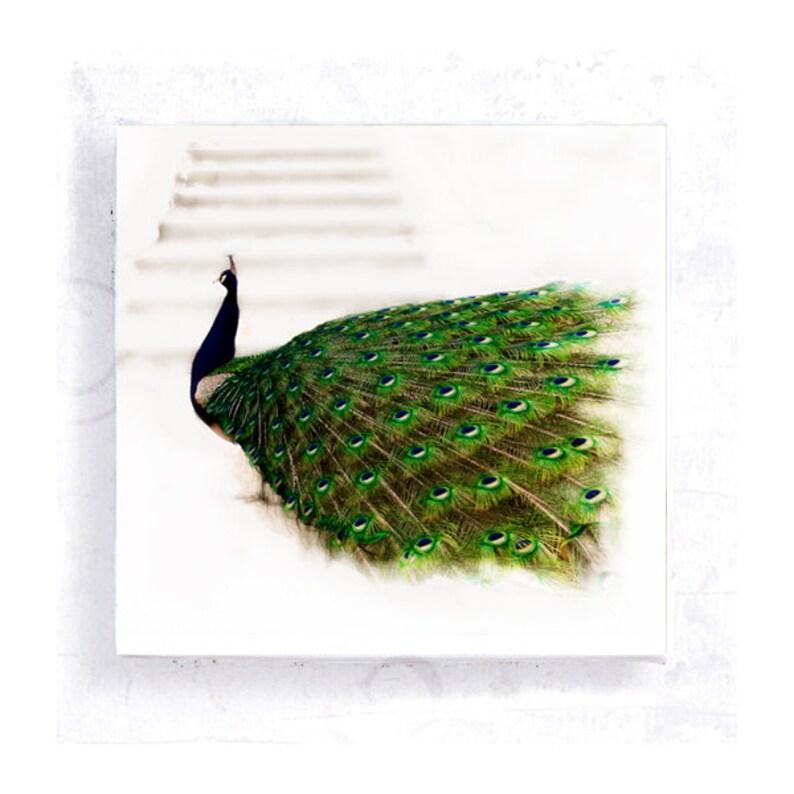 Bird Art  Peacock Art Print  Peacock on 5x5 Canvas Print  image 0