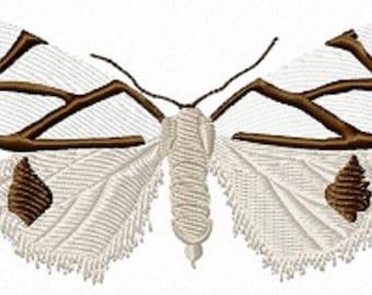 clara satin moth 110a