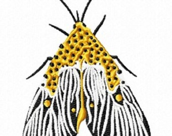 mystery moth 178