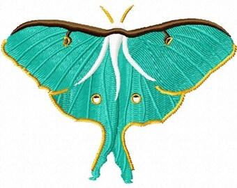 luna moth 147