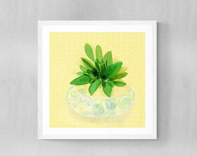 Succulents in bowl framed print