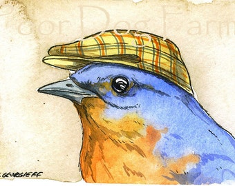 Bluebird with hat-