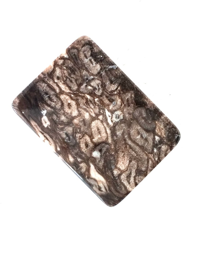 Palm Root Rectangular Polished Stone Designer Cabochon 24 x 33 mm  PR2