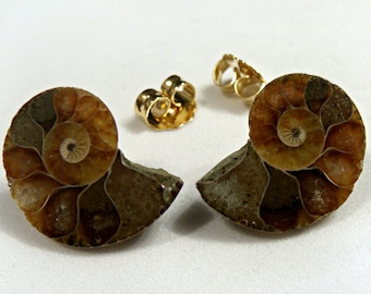 Ammonite Stone Fossil Stud Post Earrings, Natural Biology Jewelry