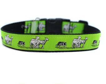 1 Inch Wide Dog Collar with Adjustable Buckle or Martingale in Border Collie