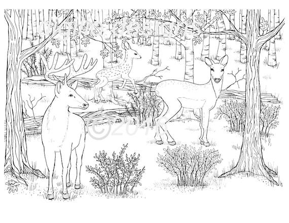 Adultos para colorear página-ciervos-bosque-bosque-ciervos en | Etsy
