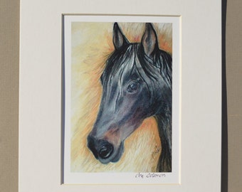 Black Horse Art Signed Matted Print By Cori Solomon