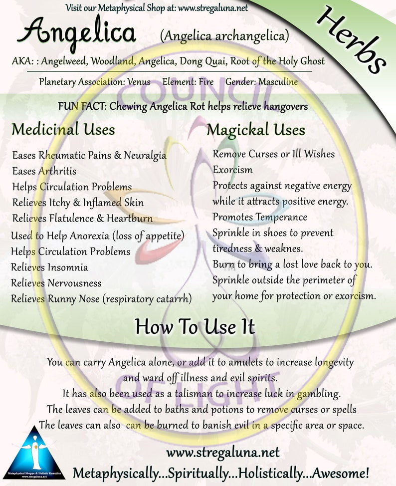 Angelica Root Herb Magickal Use BOS Page  Grimoire Pages image 0