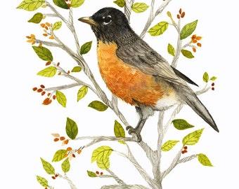 American Robin watercolor PRINT