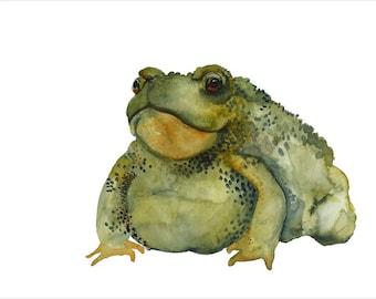 toad watercolor- Burp- toad art archival print
