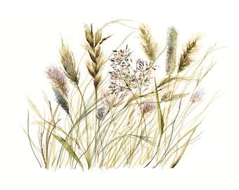 Grasses - print of original watercolor