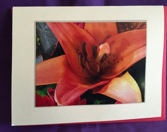 Day Lily Photo Blank Note Card