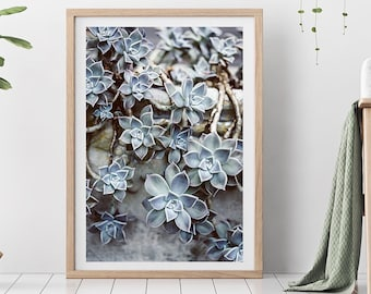 Fine Art  Print - (Print # 563) Succulents -  Fine Art Print - Two Paper Choices-  Natural Decor - Boho -