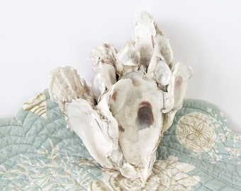 Oyster Shell Cluster, Oyster Clump, Real Oyster Shells, Oyster Cluster for Display, Natural Oyster Group, Clump of Oysters, Oysters