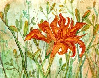 Orange Daylily : Fine Art Print