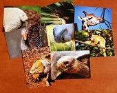 Set of 8 fauna postcards