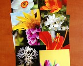 Set of 8 flora postcards