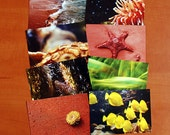 Set of 8 water world postcards
