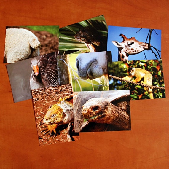 Set of 8 fauna postcards