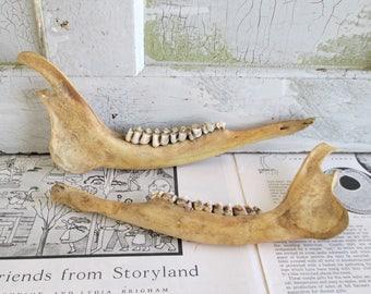 Pair of Vintage Deer Jaw Bones