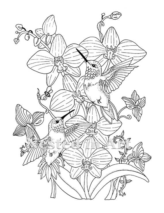 Adult Coloring Page Hummingbirds and Orchids Digital | Etsy