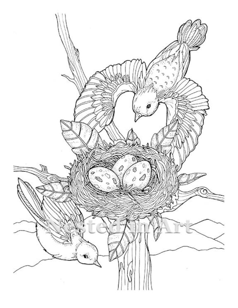 Kleurplaten Kleine Vogels.Volwassen Kleurplaat 2 Vogels Vliegen Met Nest Digitale Etsy