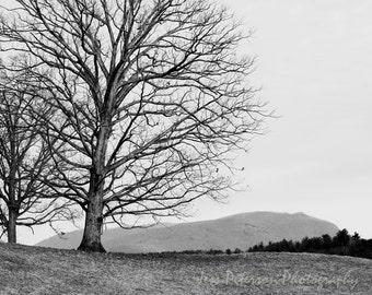 Mountain Tree Photography, Black & White Home Decor, winter landscape photos, tree print art,  minimalist wall art, rustic home decor