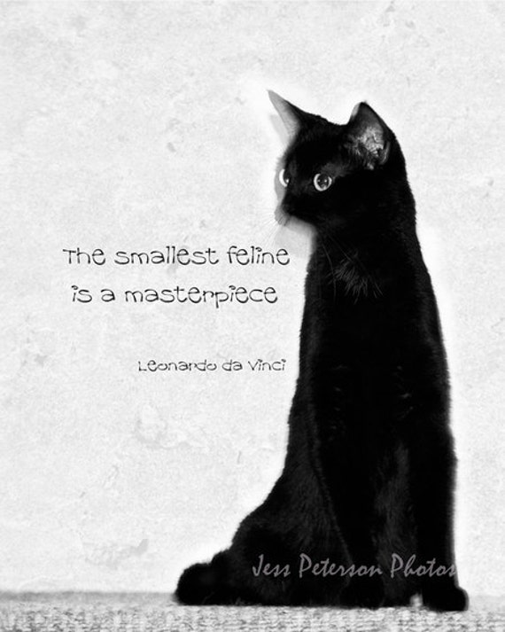 Cat Quotes Photo, Cat photography Feline Cat Typography Minimalist Photo  Print. Black and White Home Decor Cat Lover Gift Nursery art print