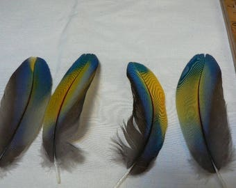 Multi colored Macaw Feathers for crafting, jewlery feathers, natural rainbow colored Macaw feathers, cruelty free collection #CJ5
