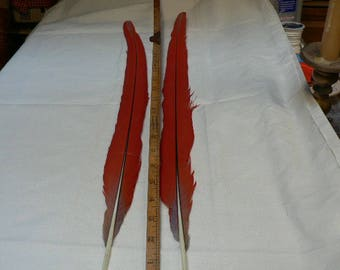 Scarlet Macaw Tail feathers, extra long 24 inch pair of  macaw tail feathers CJ1