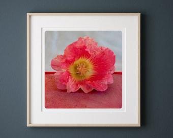 Pink Flower photography  Botanical fine art print Monochromatic macro photograph  Fuschia Wall decor POLE FLUO