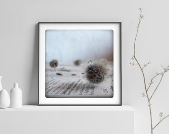 Botanical Macro photography Black and white Prickle  Still Life Print  Minimaliste Abstract home decor PIQUANT BLANC