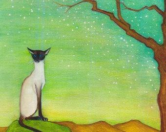 Starbright - Siamese Cat