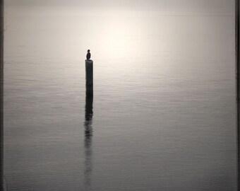 Beige Taupe Solitary Bird Photograph--Sentinel 2--TTV  Fine Art