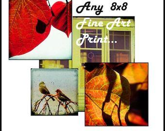SALE--Any 8x8 Fine Art Photograph for 15 USD