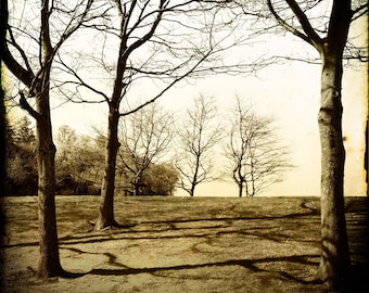 Sepia Trees Photograph--The Family in Winter-- Fine Art