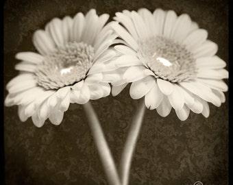 Two Daisies Sepia-toned TTV Original Signed Fine Art Photograph